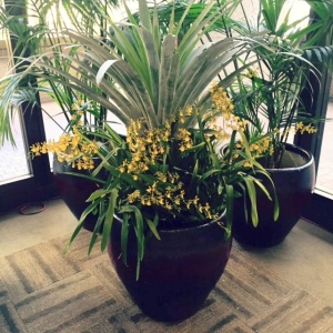 Large palm with orchids